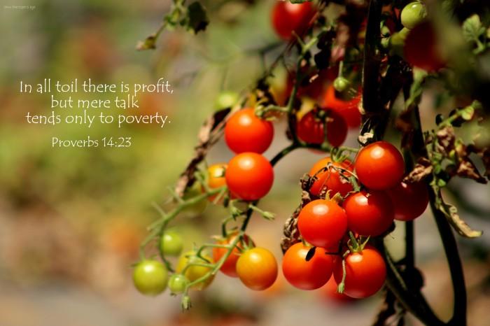 Proverbs 14 23 Bible verses