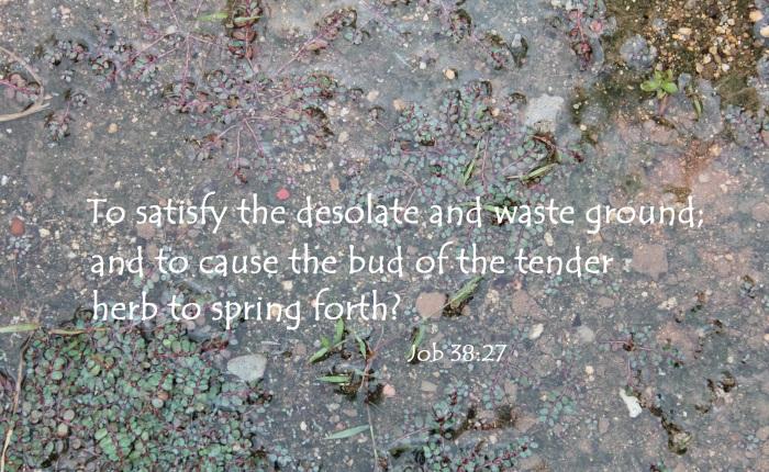 Spring forth tender!